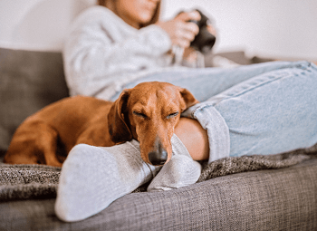 a woman is curled up on her couch with her dog asleep on her feet